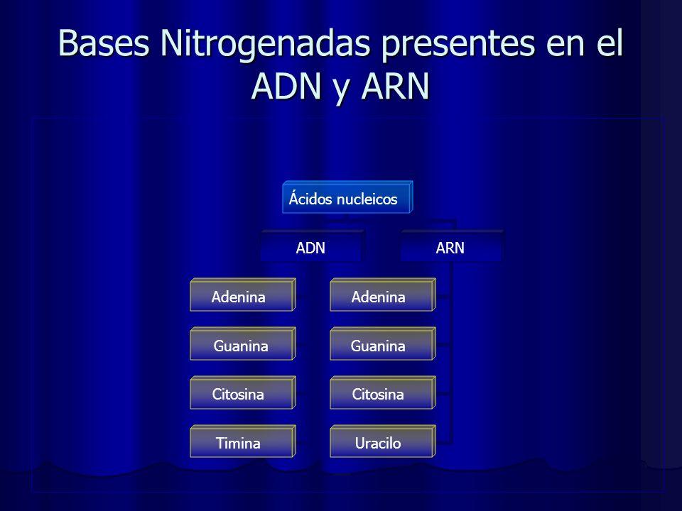 Bases Nitrogenadas presentes en el ADN y ARN Ácidos nucleicos ADN Adenina Guanina Citosina Timina ARN Adenina Guanina Citosina Uracilo