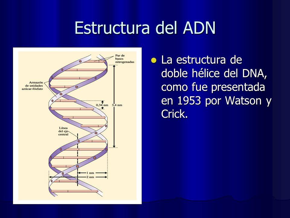 Estructura del ADN La estructura de doble hélice del DNA, como fue presentada en 1953 por Watson y Crick. La estructura de doble hélice del DNA, como
