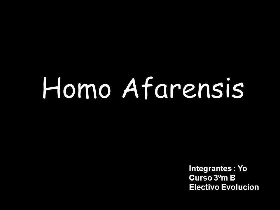 Reino: Animalia Filo: Chordata Clase: Mammalia Orden: Primates Familia: Hominidae Género: Australopithecus Especie: Afarensis