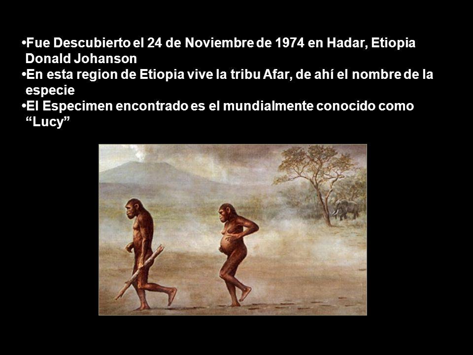 Fue Descubierto el 24 de Noviembre de 1974 en Hadar, Etiopia Donald Johanson En esta region de Etiopia vive la tribu Afar, de ahí el nombre de la.especie El Especimen encontrado es el mundialmente conocido como.Lucy