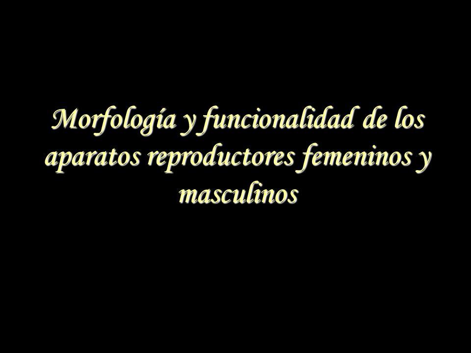 Morfología y funcionalidad de los aparatos reproductores femeninos y masculinos