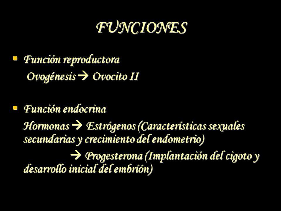 FUNCIONES Función reproductora Función reproductora Ovogénesis Ovocito II Ovogénesis Ovocito II Función endocrina Función endocrina Hormonas Estrógeno