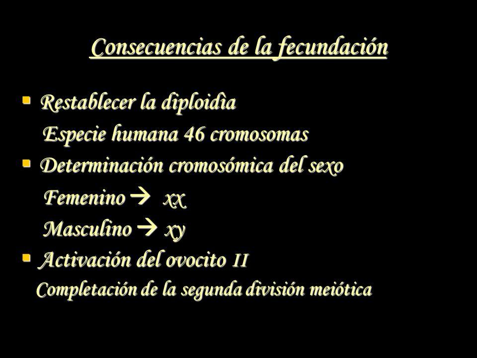 Consecuencias de la fecundación Restablecer la diploidìa Restablecer la diploidìa Especie humana 46 cromosomas Especie humana 46 cromosomas Determinac