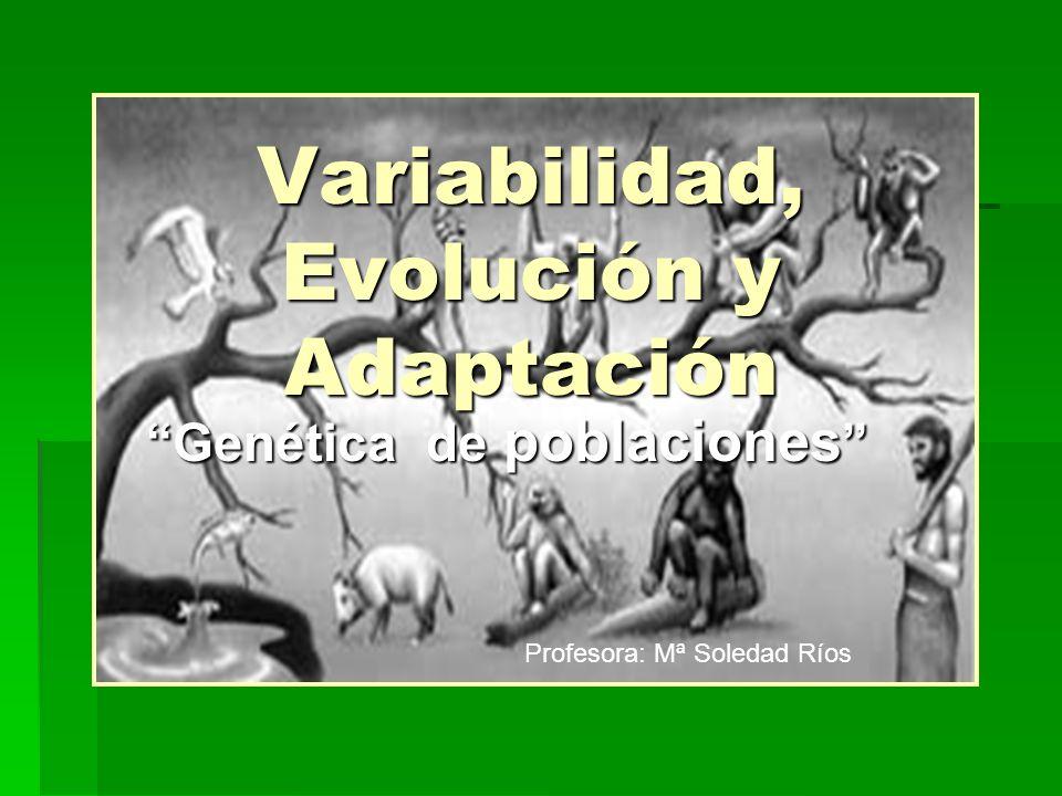 Variabilidad, Evolución y Adaptación Genética de poblaciones Genética de poblaciones Profesora: Mª Soledad Ríos