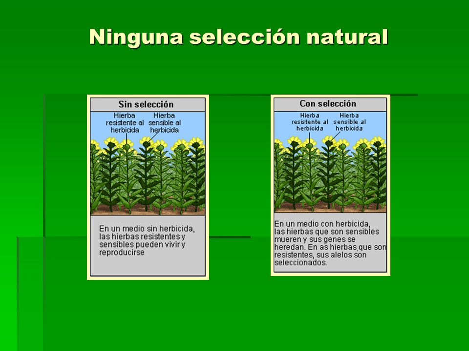 Ninguna selección natural