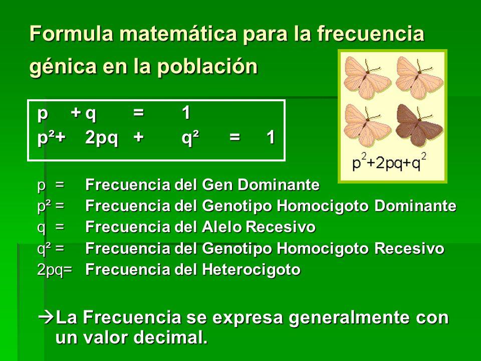 Formula matemática para la frecuencia génica en la población p +q=1 p²+2pq+q²= 1 p=Frecuencia del Gen Dominante p²=Frecuencia del Genotipo Homocigoto