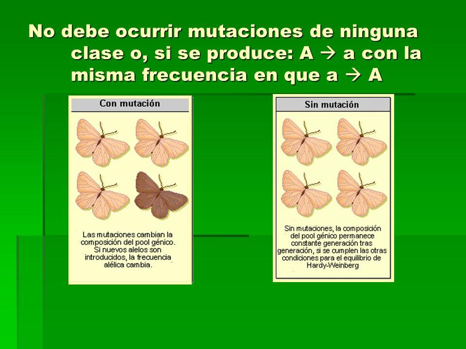 No debe ocurrir mutaciones de ninguna clase o, si se produce: A a con la misma frecuencia en que a A