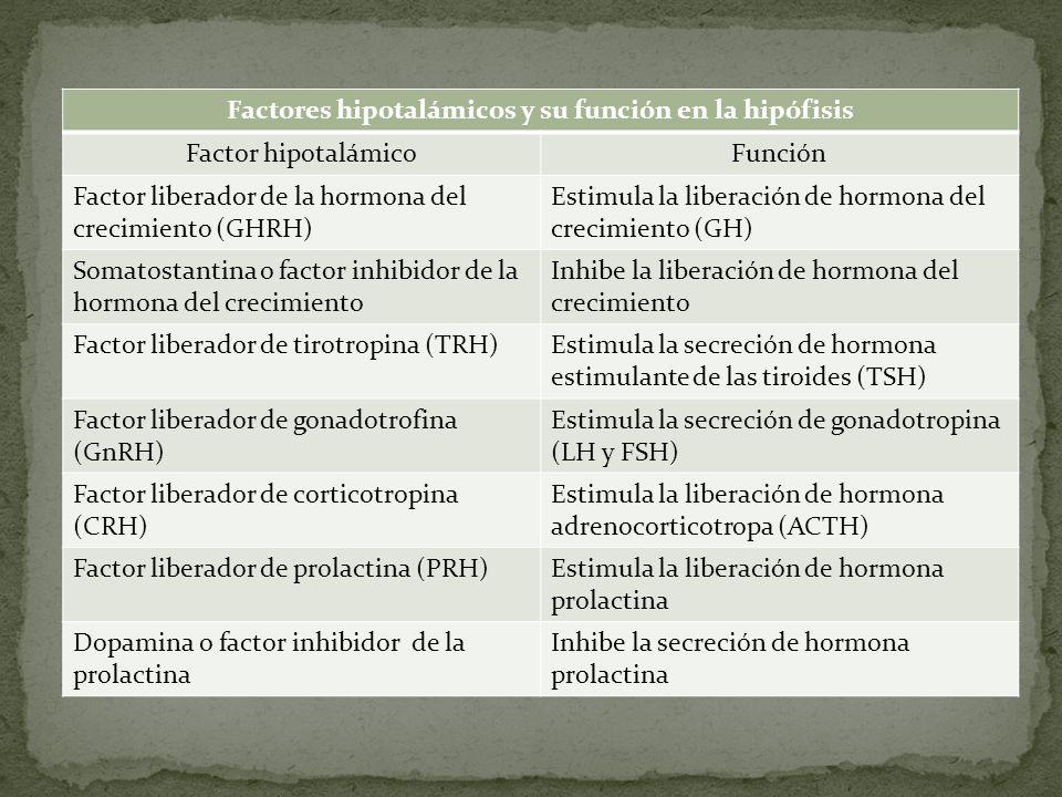 Factores hipotalámicos y su función en la hipófisis Factor hipotalámicoFunción Factor liberador de la hormona del crecimiento (GHRH) Estimula la liber