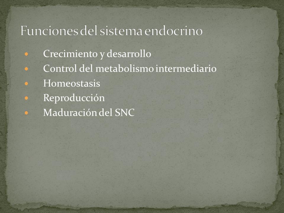 Crecimiento y desarrollo Control del metabolismo intermediario Homeostasis Reproducción Maduración del SNC