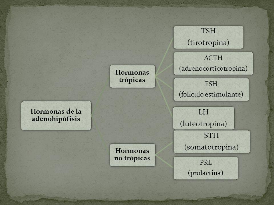 Hormonas de la adenohipófisis Hormonas trópicas TSH (tirotropina) ACTH (adrenocorticotropina) FSH (folículo estimulante) LH (luteotropina) Hormonas no