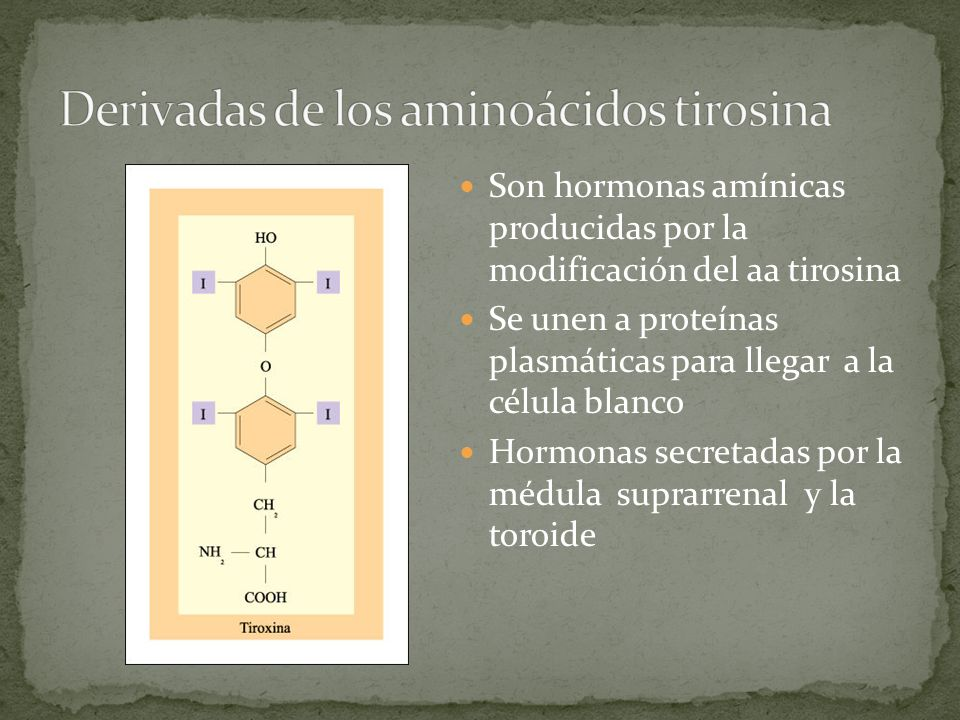 Son hormonas amínicas producidas por la modificación del aa tirosina Se unen a proteínas plasmáticas para llegar a la célula blanco Hormonas secretada