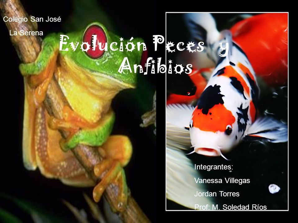 Integrantes:- Vanessa Villegas - Jordan Torres - Jordan Torres Asignatura: Elec. Biología Profesora:Mª Soledad Ríos Colegio San José Evolución Peces y