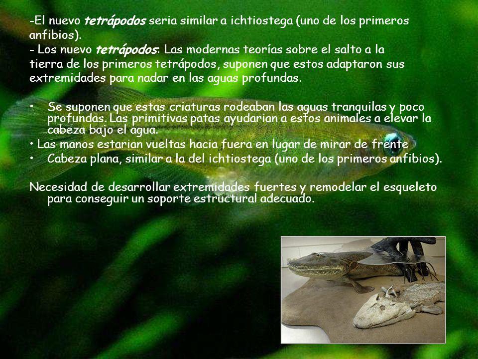 -El nuevo tetrápodos seria similar a ichtiostega (uno de los primeros anfibios). - Los nuevo tetrápodos: Las modernas teorías sobre el salto a la tier