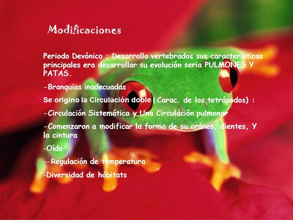 Modificaciones Periodo Devónico ; Desarrollo vertebrados sus características principales era desarrollar su evolución seria PULMONES Y PATAS. -Branqui