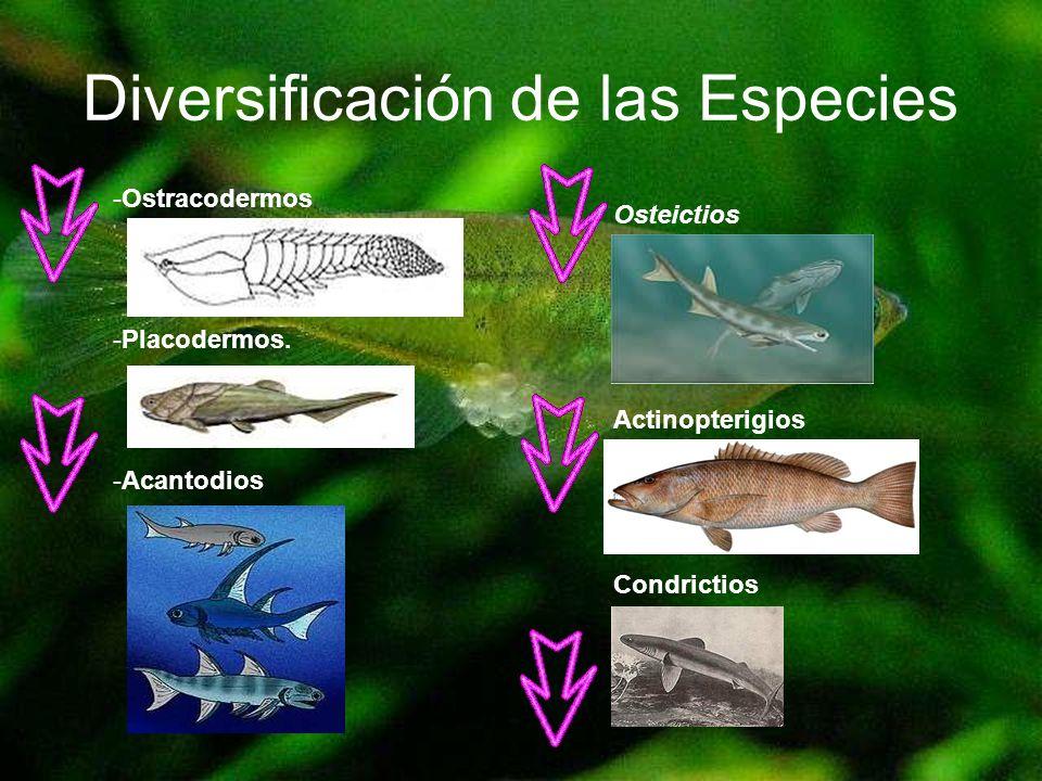 Reproducción y su Desarrollo Anuros: Ovíparos puesta de huevos en el medio externo el cual saldrán unas larvas que reciben el nombre de renacuajos.