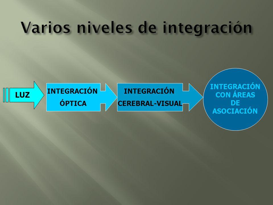 LUZ INTEGRACIÓN ÓPTICA INTEGRACIÓN CEREBRAL-VISUAL INTEGRACIÓN CON ÁREAS DE ASOCIACIÓN