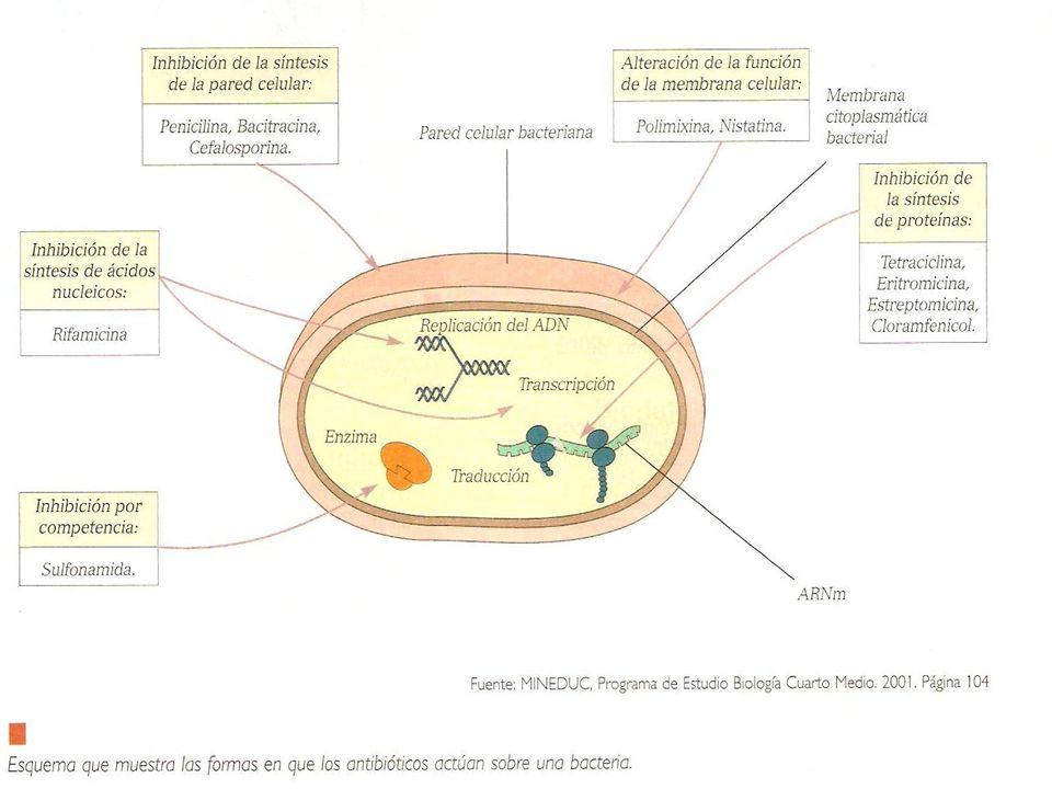 El antibiograma Una prueba microbiológica que se realiza para determinar la sensibilidad de una colonia bacteriana a un antibiótico o grupo de antibióticos.