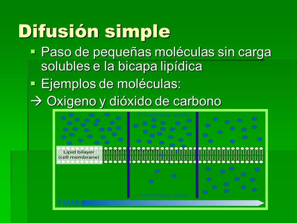 Difusión simple Paso de pequeñas moléculas sin carga solubles e la bicapa lipídica Paso de pequeñas moléculas sin carga solubles e la bicapa lipídica