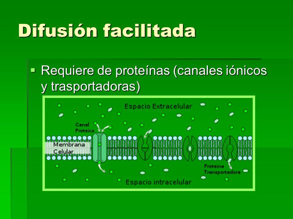 Difusión facilitada Requiere de proteínas (canales iónicos y trasportadoras) Requiere de proteínas (canales iónicos y trasportadoras)