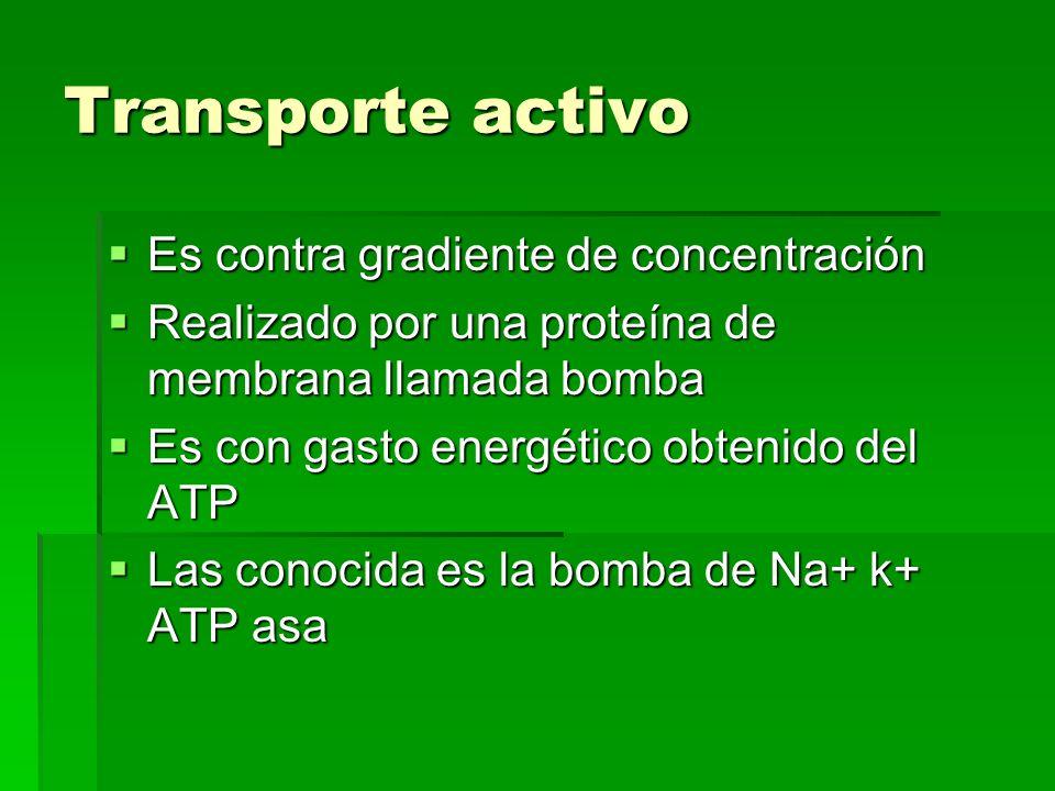 Transporte activo Es contra gradiente de concentración Es contra gradiente de concentración Realizado por una proteína de membrana llamada bomba Reali
