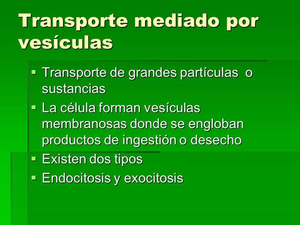 Transporte mediado por vesículas Transporte de grandes partículas o sustancias Transporte de grandes partículas o sustancias La célula forman vesícula