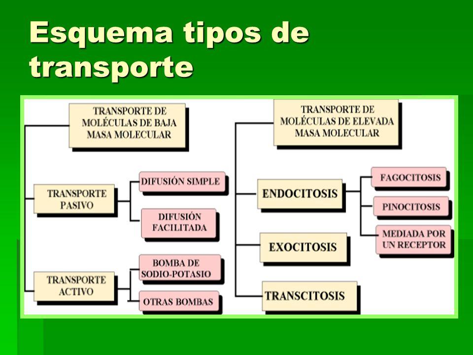 Esquema tipos de transporte