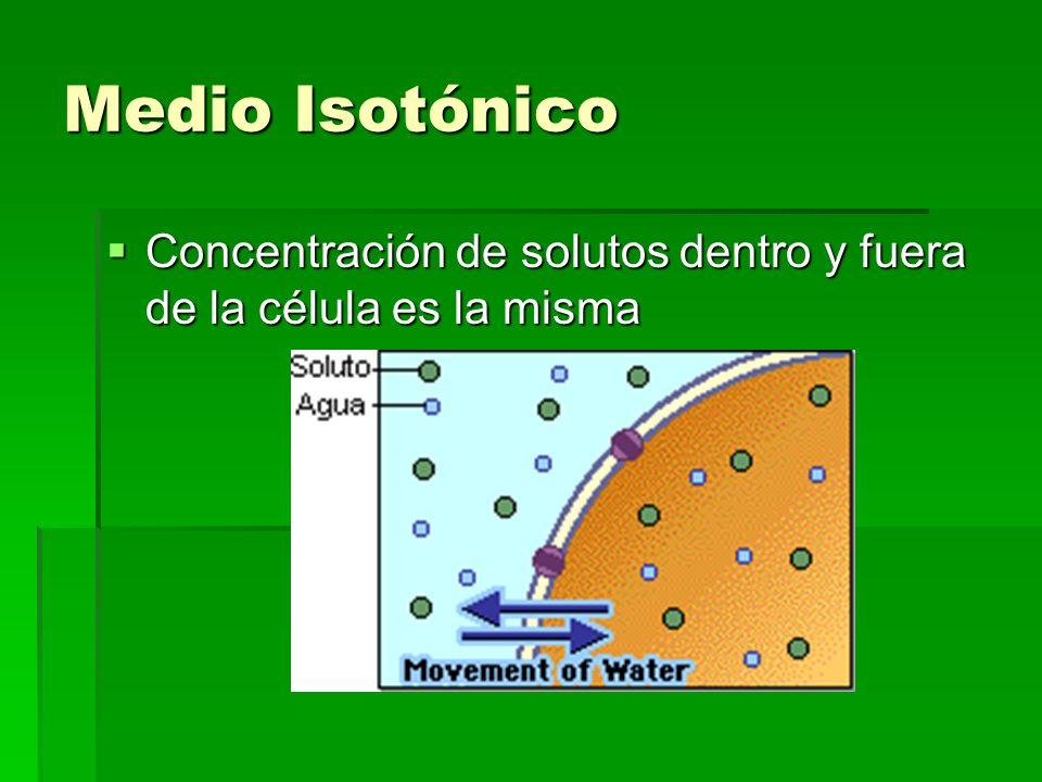 Medio Isotónico Concentración de solutos dentro y fuera de la célula es la misma Concentración de solutos dentro y fuera de la célula es la misma