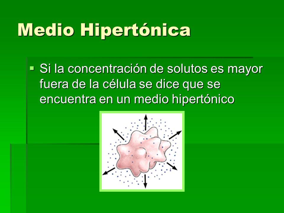 Medio Hipertónica Si la concentración de solutos es mayor fuera de la célula se dice que se encuentra en un medio hipertónico Si la concentración de s