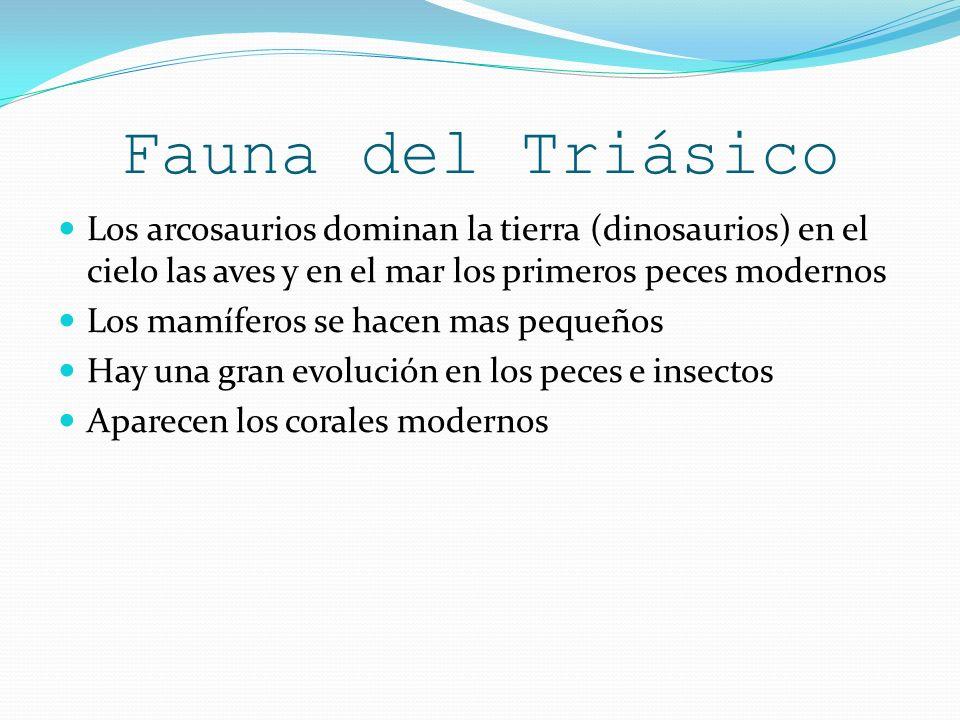 Fauna del Triásico Los arcosaurios dominan la tierra (dinosaurios) en el cielo las aves y en el mar los primeros peces modernos Los mamíferos se hacen