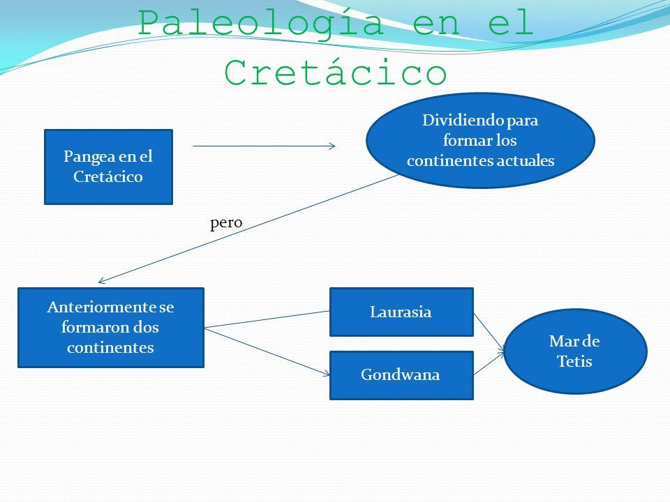 Paleología en el Cretácico Pangea en el Cretácico Dividiendo para formar los continentes actuales Anteriormente se formaron dos continentes pero Laura