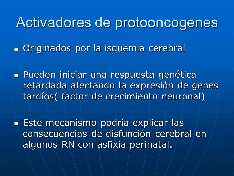 Activadores de protooncogenes Originados por la isquemia cerebral Originados por la isquemia cerebral Pueden iniciar una respuesta genética retardada