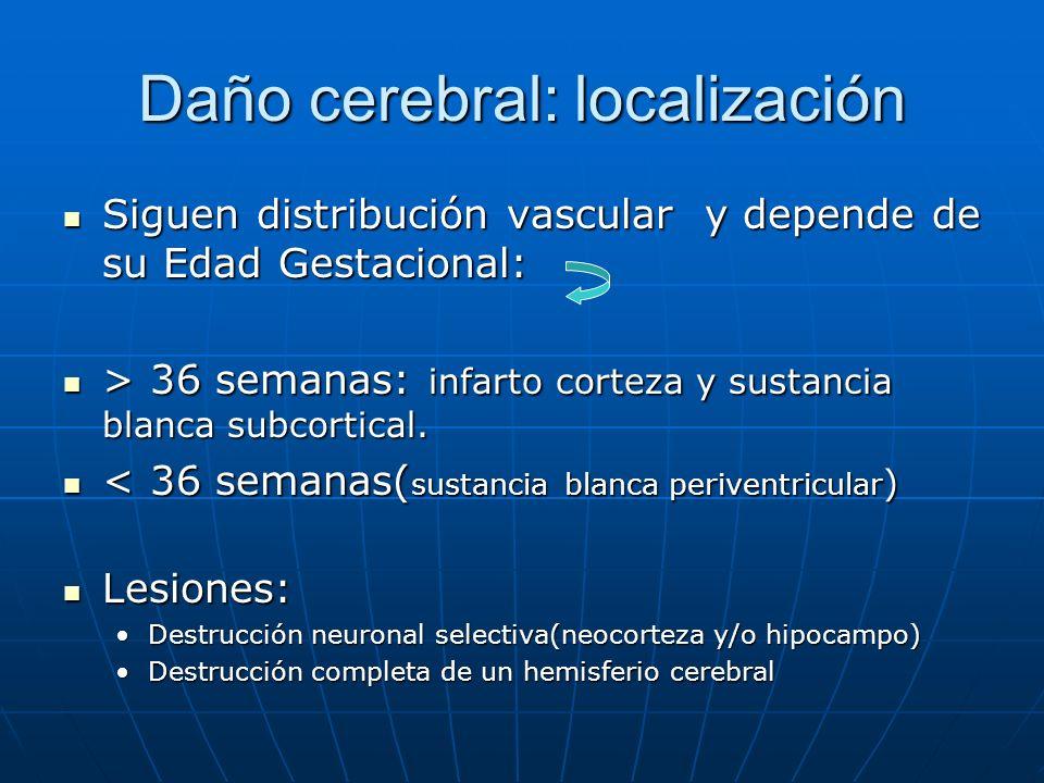 Daño cerebral: localización Siguen distribución vascular y depende de su Edad Gestacional: Siguen distribución vascular y depende de su Edad Gestacion