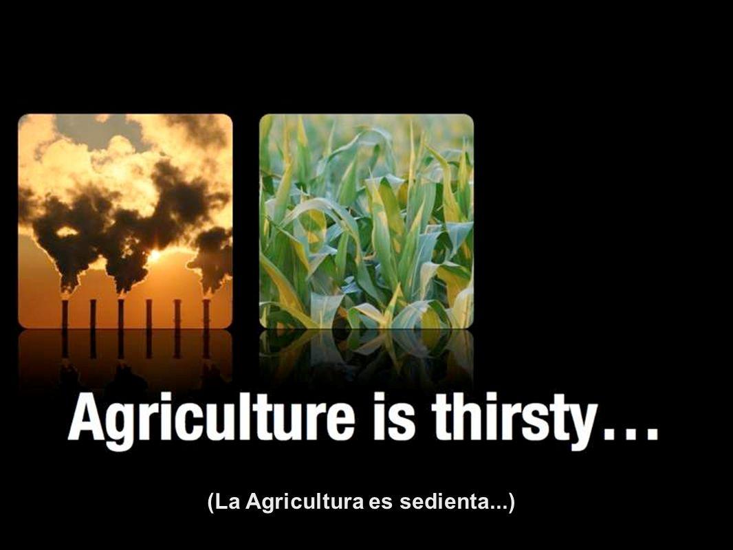 (La Agricultura es sedienta...)