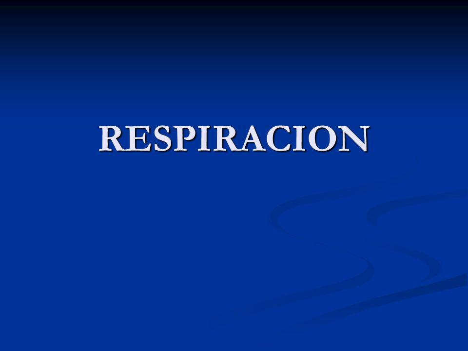 BULIMIA SIGNIFICADO HAMBRE EN EXCESO SIGNIFICADO HAMBRE EN EXCESO HAMBRE DE BUEY HAMBRE DE BUEY AFECTA MAYORMENTE A MUJERES AFECTA MAYORMENTE A MUJERES SE CARACTERIZA POR ATRACONES COMPULSIVOS SE CARACTERIZA POR ATRACONES COMPULSIVOS CULPA ANGUSTIA Y PERDIDA DE CONTROL CULPA ANGUSTIA Y PERDIDA DE CONTROL