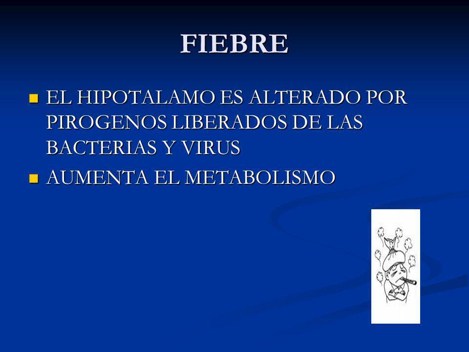 FIEBRE EL HIPOTALAMO ES ALTERADO POR PIROGENOS LIBERADOS DE LAS BACTERIAS Y VIRUS EL HIPOTALAMO ES ALTERADO POR PIROGENOS LIBERADOS DE LAS BACTERIAS Y