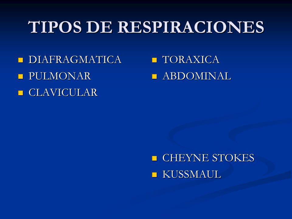 TIPOS DE RESPIRACIONES DIAFRAGMATICA DIAFRAGMATICA PULMONAR PULMONAR CLAVICULAR CLAVICULAR TORAXICA ABDOMINAL CHEYNE STOKES KUSSMAUL