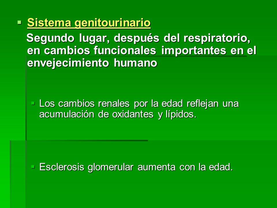 Sistema genitourinario Sistema genitourinario Segundo lugar, después del respiratorio, en cambios funcionales importantes en el envejecimiento humano