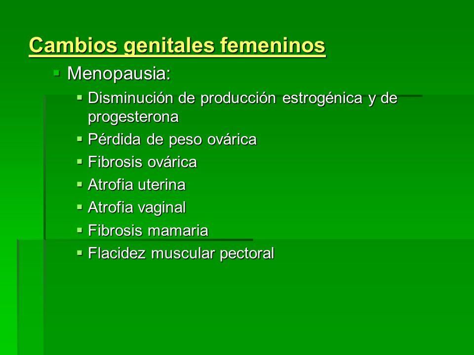 Cambios genitales femeninos Menopausia: Menopausia: Disminución de producción estrogénica y de progesterona Disminución de producción estrogénica y de