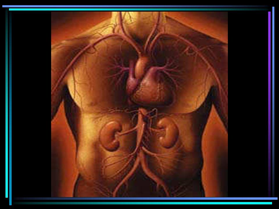 TUMORES ENFERMEDADES INFECCIOSAS Infección Nefropatía MEDICAMENTOS Acyclovir, ARV, Ethambutol DROGAS ILEGALES Heroína, Cocaína ENFERMEDADES RENALES EN VIH (+)