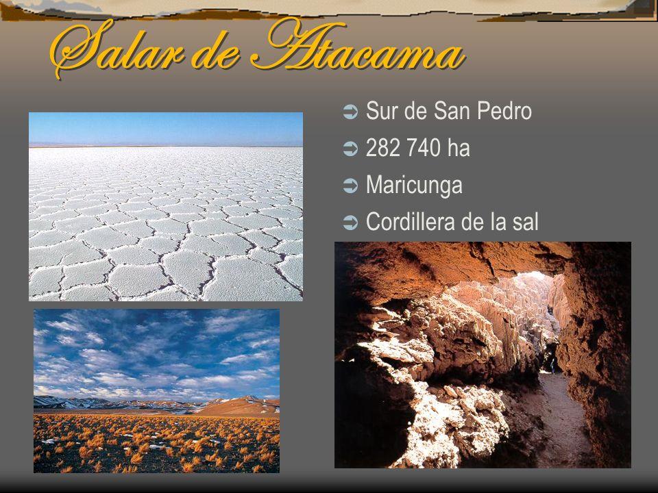 Salar de Atacama Sur de San Pedro 282 740 ha Maricunga Cordillera de la sal