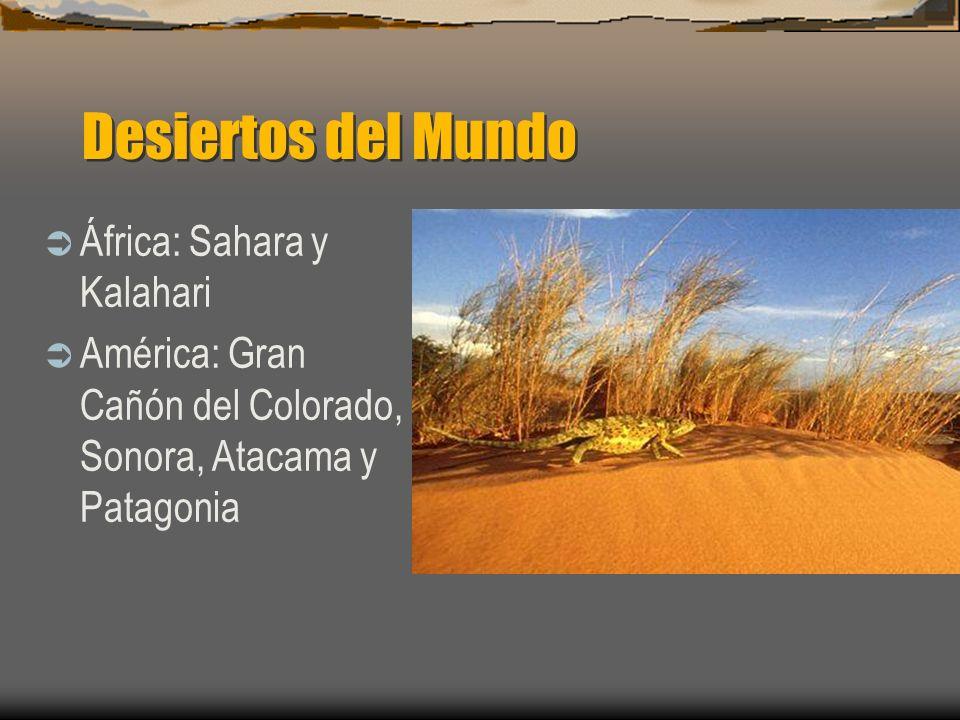 Desiertos del Mundo África: Sahara y Kalahari América: Gran Cañón del Colorado, Sonora, Atacama y Patagonia