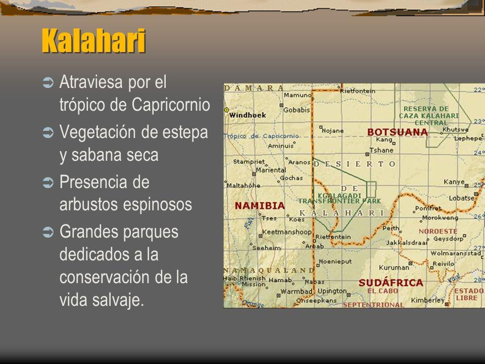 Kalahari Atraviesa por el trópico de Capricornio Vegetación de estepa y sabana seca Presencia de arbustos espinosos Grandes parques dedicados a la con