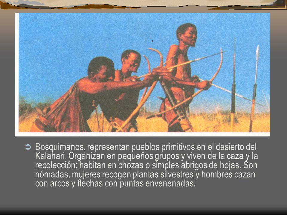Bosquimanos, representan pueblos primitivos en el desierto del Kalahari. Organizan en pequeños grupos y viven de la caza y la recolección; habitan en