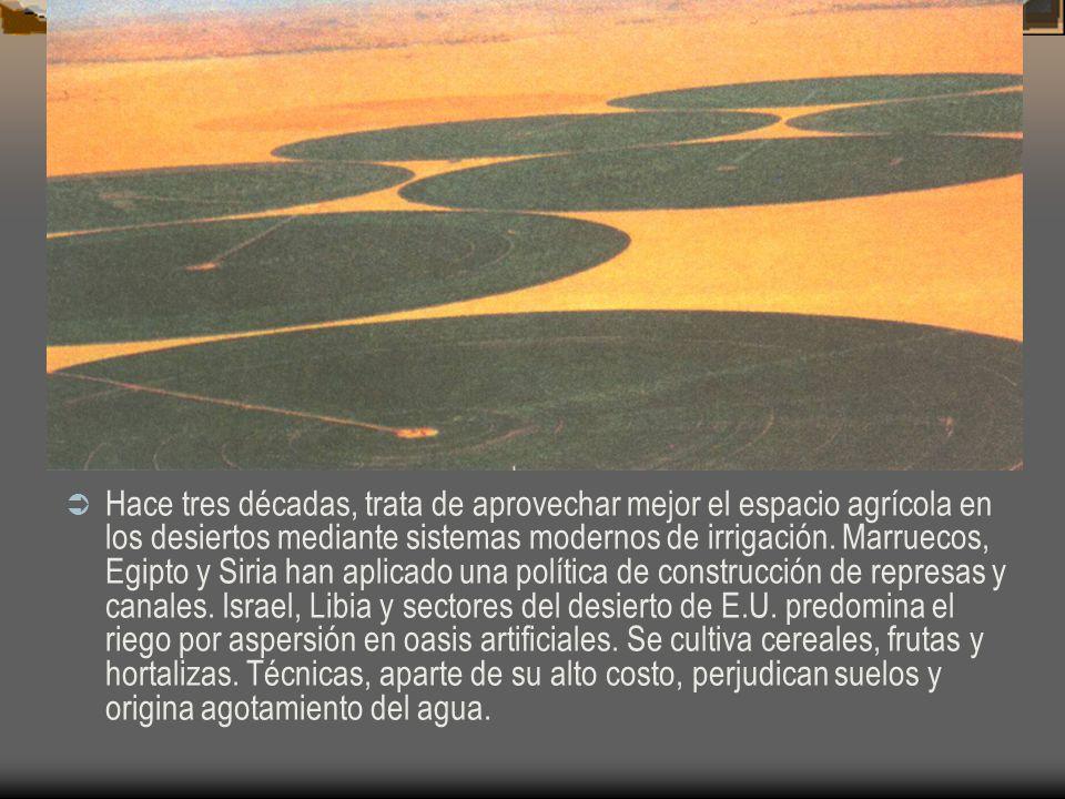 Hace tres décadas, trata de aprovechar mejor el espacio agrícola en los desiertos mediante sistemas modernos de irrigación. Marruecos, Egipto y Siria