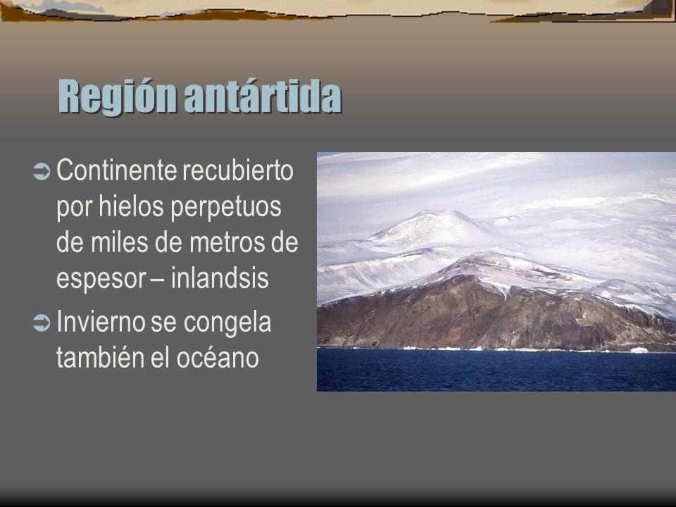 Región antártida Continente recubierto por hielos perpetuos de miles de metros de espesor – inlandsis Invierno se congela también el océano