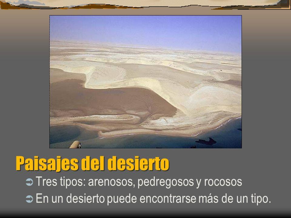Paisajes del desierto Tres tipos: arenosos, pedregosos y rocosos En un desierto puede encontrarse más de un tipo.