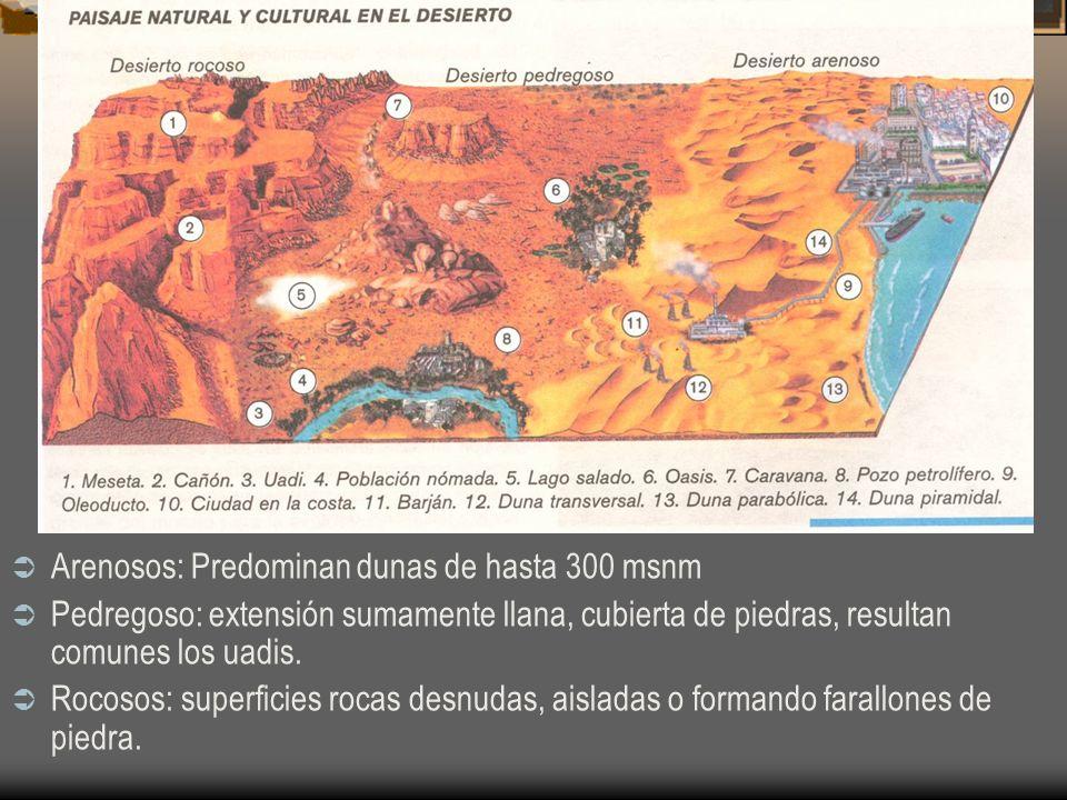 Arenosos: Predominan dunas de hasta 300 msnm Pedregoso: extensión sumamente llana, cubierta de piedras, resultan comunes los uadis. Rocosos: superfici
