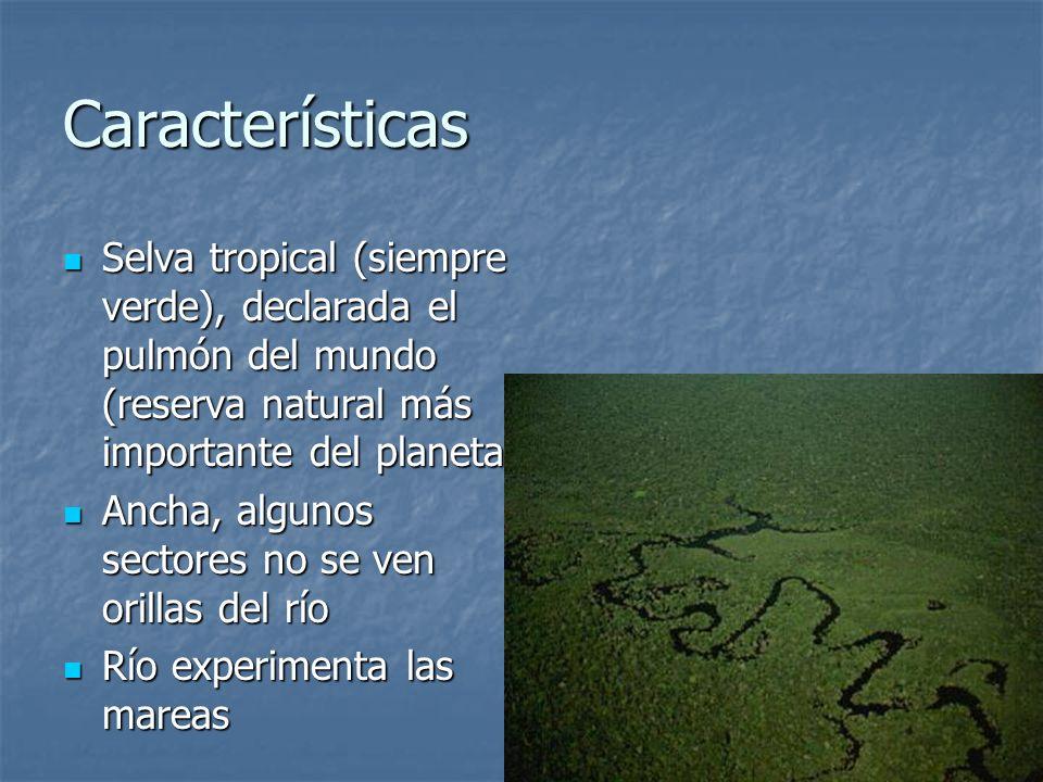 Características Selva tropical (siempre verde), declarada el pulmón del mundo (reserva natural más importante del planeta) Selva tropical (siempre ver