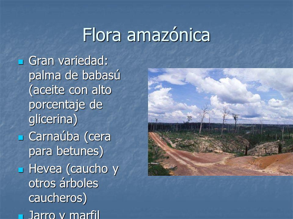 Flora amazónica Gran variedad: palma de babasú (aceite con alto porcentaje de glicerina) Gran variedad: palma de babasú (aceite con alto porcentaje de