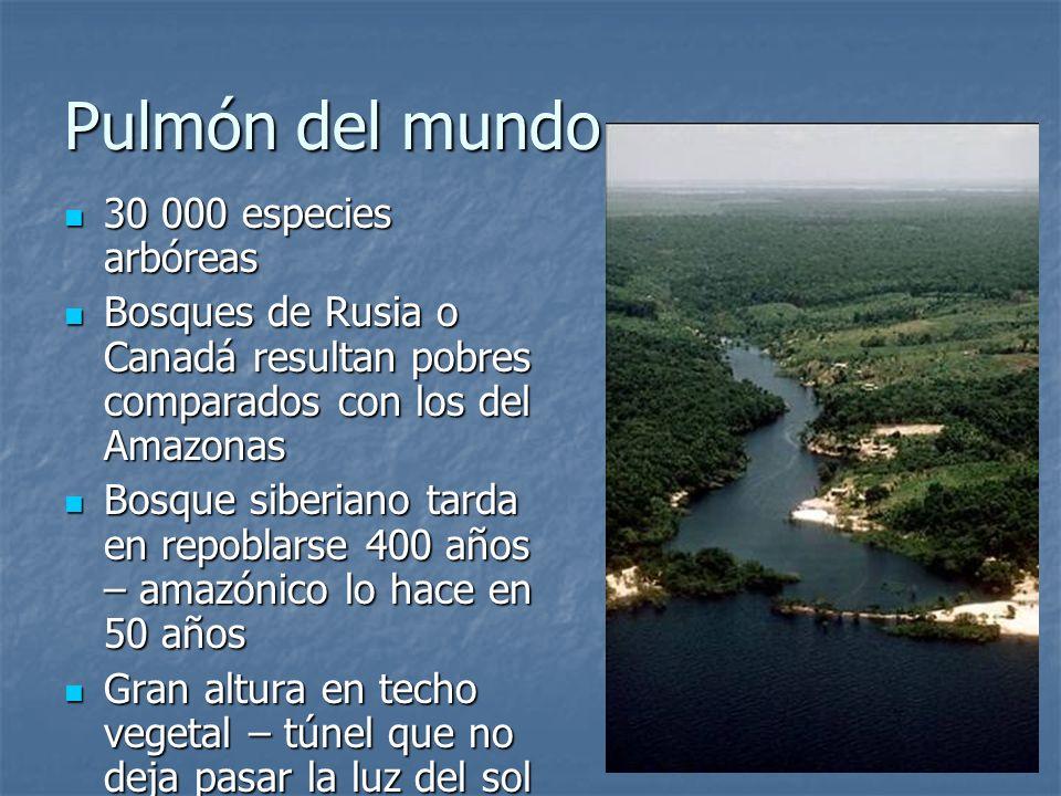 Pulmón del mundo 30 000 especies arbóreas 30 000 especies arbóreas Bosques de Rusia o Canadá resultan pobres comparados con los del Amazonas Bosques d